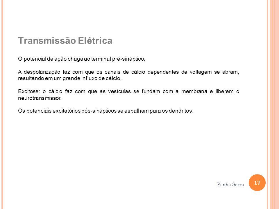 Transmissão Elétrica O potencial de ação chaga ao terminal pré-sináptico.