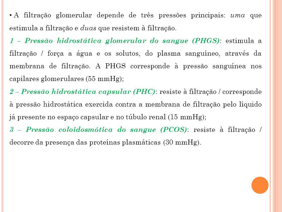 A filtração glomerular depende de três pressões principais: uma que estimula a filtração e duas que resistem à filtração.