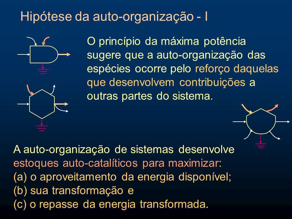 Hipótese da auto-organização - I