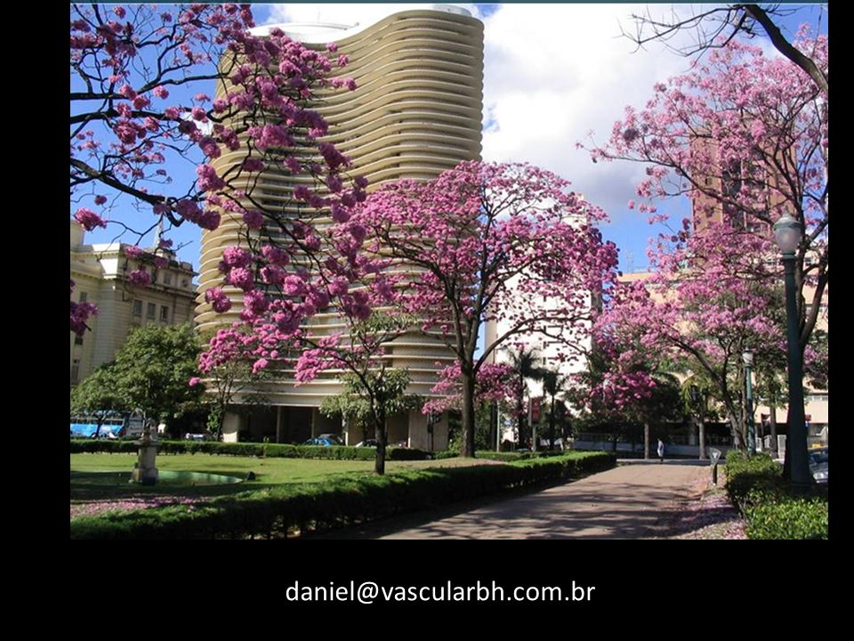 daniel@vascularbh.com.br