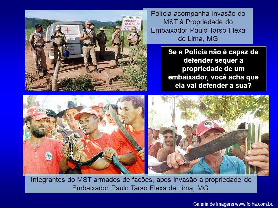Galeria de Imagens www.folha.com.br.