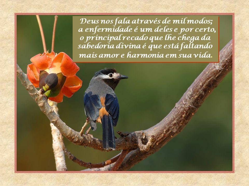 Deus nos fala através de mil modos;