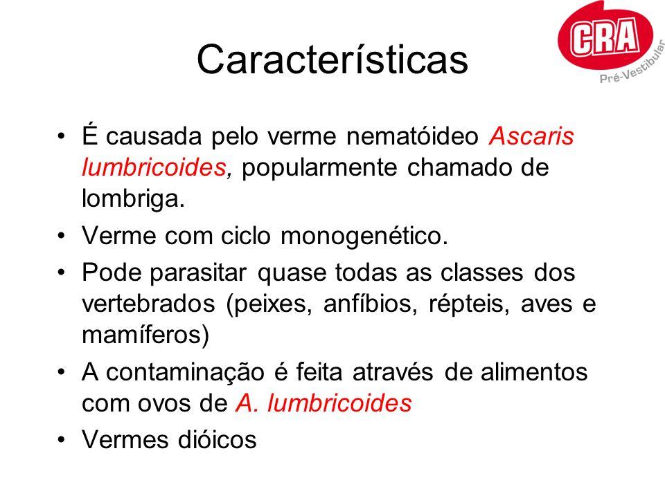 Características É causada pelo verme nematóideo Ascaris lumbricoides, popularmente chamado de lombriga.