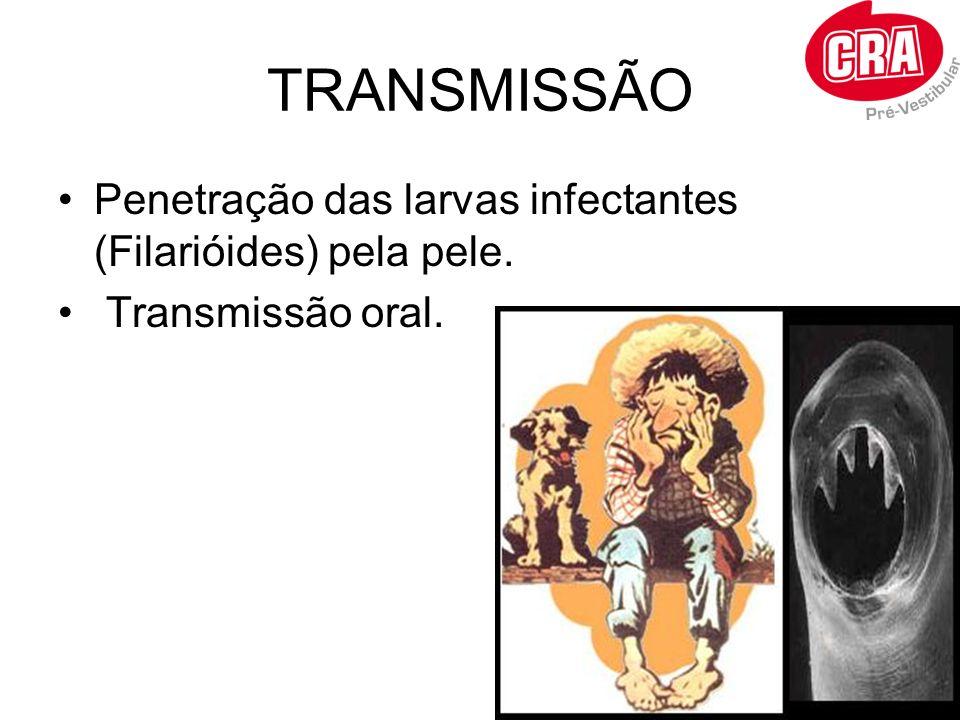 TRANSMISSÃO Penetração das larvas infectantes (Filarióides) pela pele.