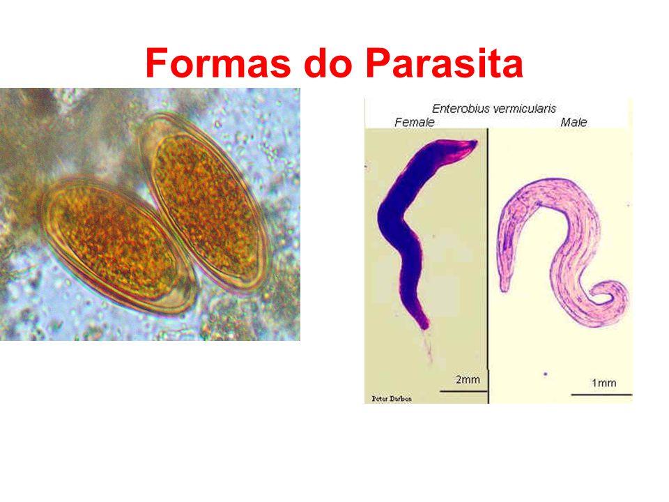 Formas do Parasita