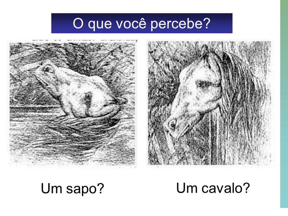 O que você percebe Um sapo Um cavalo