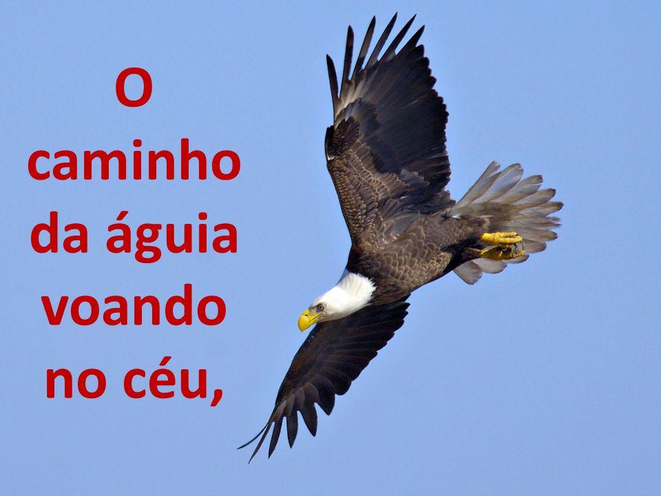 O caminho da águia voando no céu,
