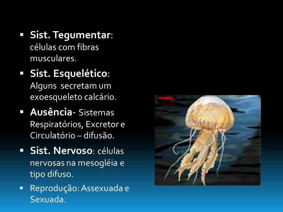 Sist. Tegumentar: células com fibras musculares.
