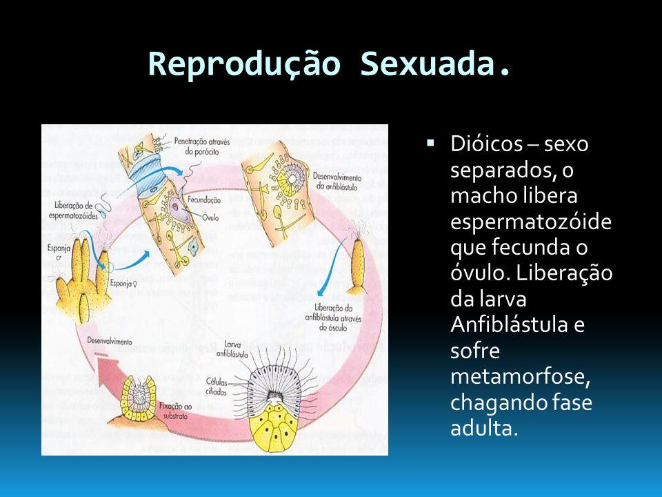 Reprodução Sexuada.