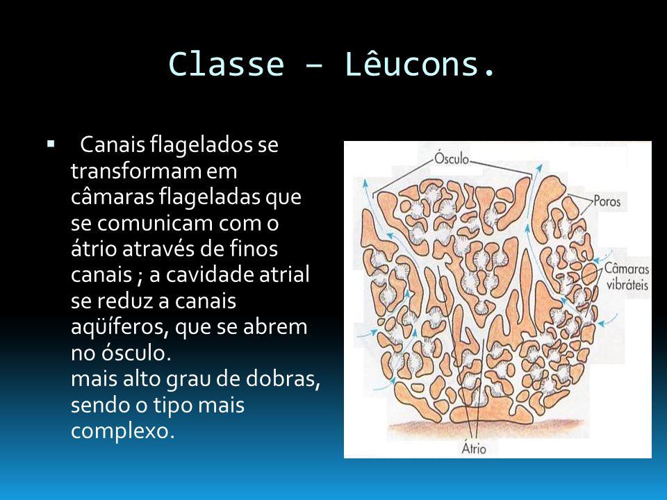 Classe – Lêucons.