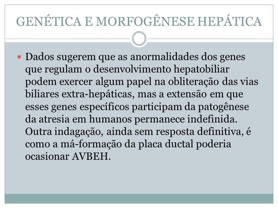 GENÉTICA E MORFOGÊNESE HEPÁTICA