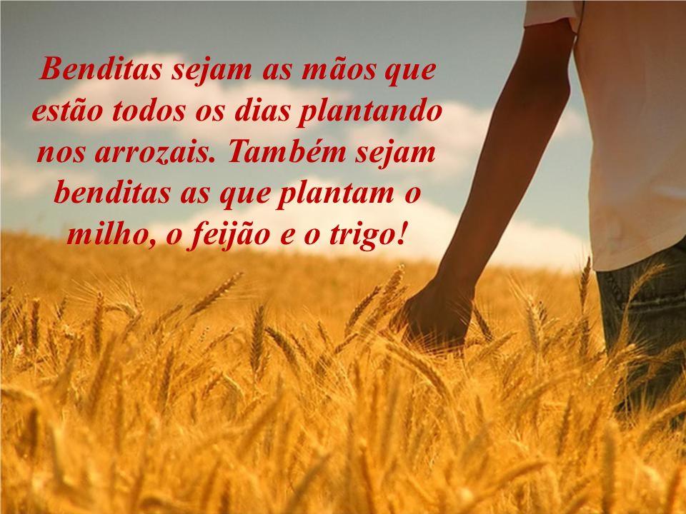 Benditas sejam as mãos que estão todos os dias plantando nos arrozais