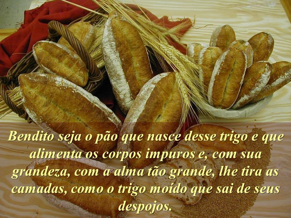 Bendito seja o pão que nasce desse trigo e que alimenta os corpos impuros e, com sua grandeza, com a alma tão grande, lhe tira as camadas, como o trigo moído que sai de seus despojos.