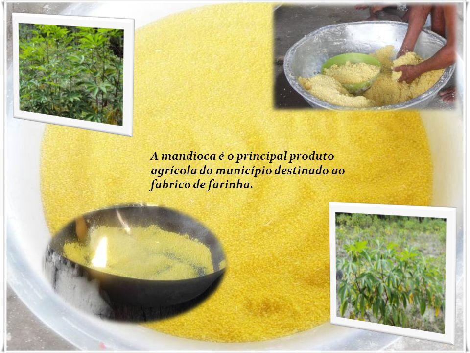A mandioca é o principal produto agrícola do município destinado ao fabrico de farinha.