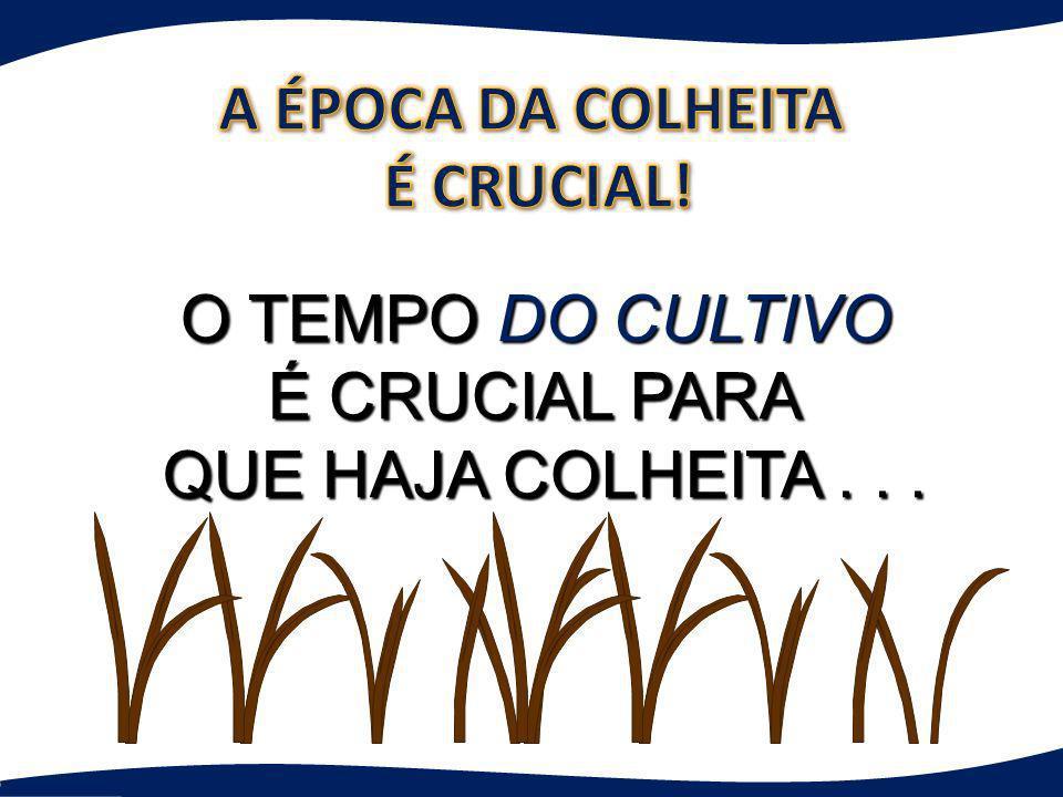 A ÉPOCA DA COLHEITA É CRUCIAL! O TEMPO DO CULTIVO É CRUCIAL PARA QUE HAJA COLHEITA . . .