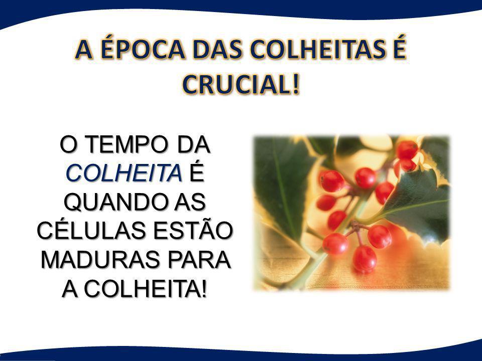 A ÉPOCA DAS COLHEITAS É CRUCIAL!
