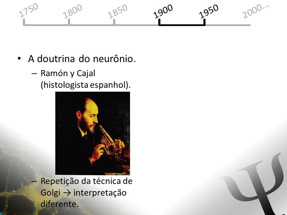 A doutrina do neurônio. Ramón y Cajal (histologista espanhol).
