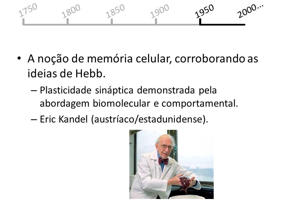 A noção de memória celular, corroborando as ideias de Hebb.