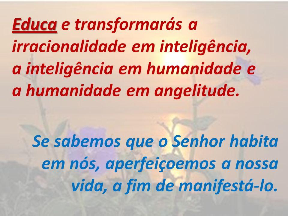 Educa e transformarás a irracionalidade em inteligência, a inteligência em humanidade e a humanidade em angelitude.