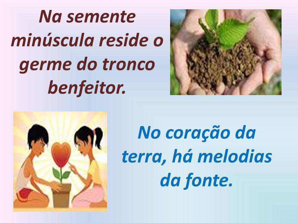 Na semente minúscula reside o germe do tronco benfeitor.