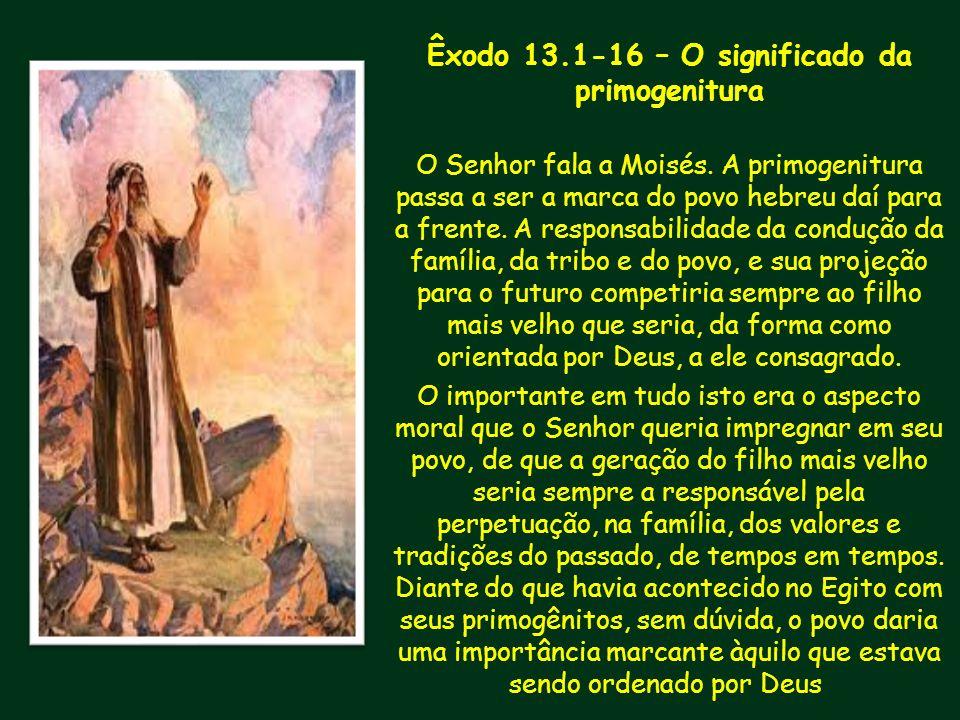 Êxodo 13.1-16 – O significado da primogenitura