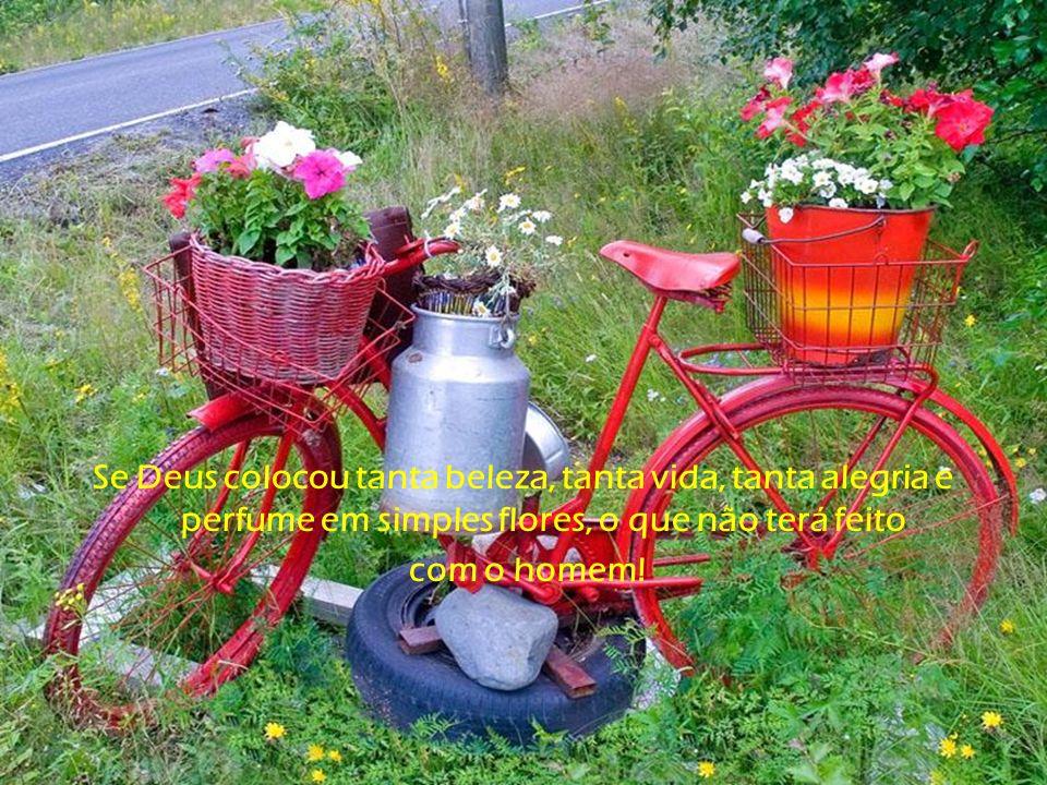 Se Deus colocou tanta beleza, tanta vida, tanta alegria e perfume em simples flores, o que não terá feito