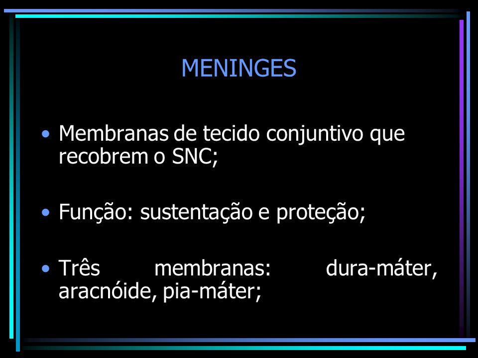 MENINGES Membranas de tecido conjuntivo que recobrem o SNC;