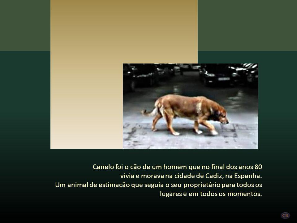 Canelo foi o cão de um homem que no final dos anos 80 vivia e morava na cidade de Cadiz, na Espanha.