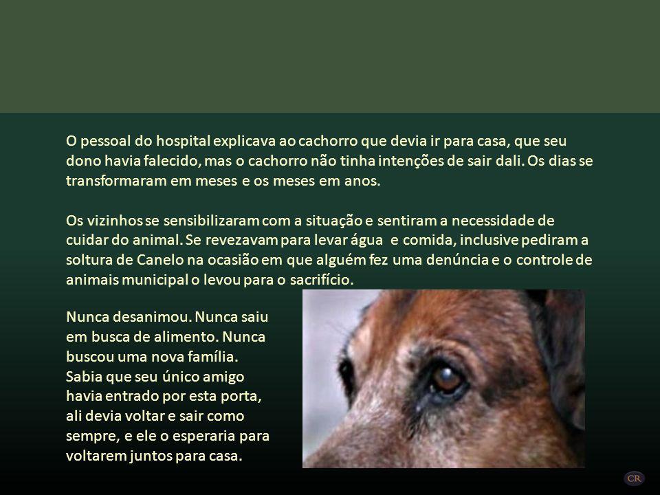 O pessoal do hospital explicava ao cachorro que devia ir para casa, que seu dono havia falecido, mas o cachorro não tinha intenções de sair dali. Os dias se transformaram em meses e os meses em anos.