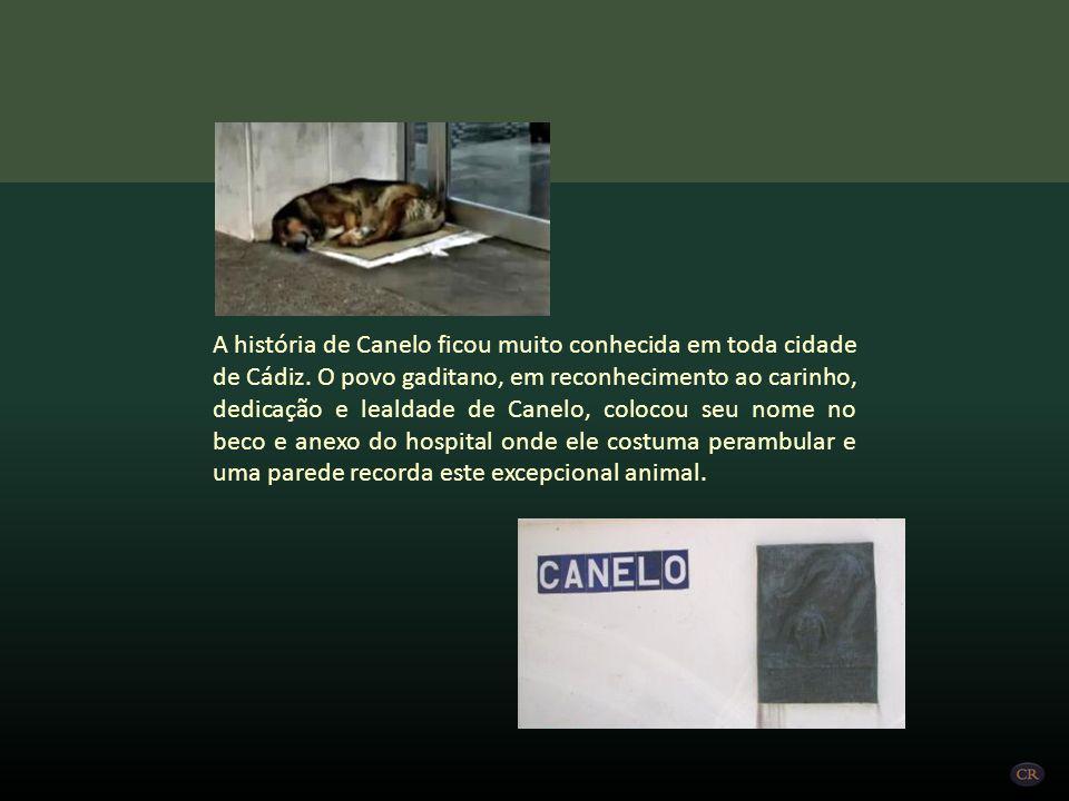 A história de Canelo ficou muito conhecida em toda cidade de Cádiz