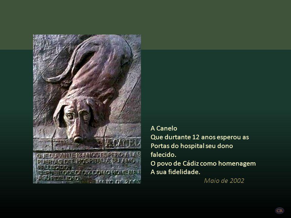 A Canelo Que durtante 12 anos esperou as. Portas do hospital seu dono falecido. O povo de Cádiz como homenagem.