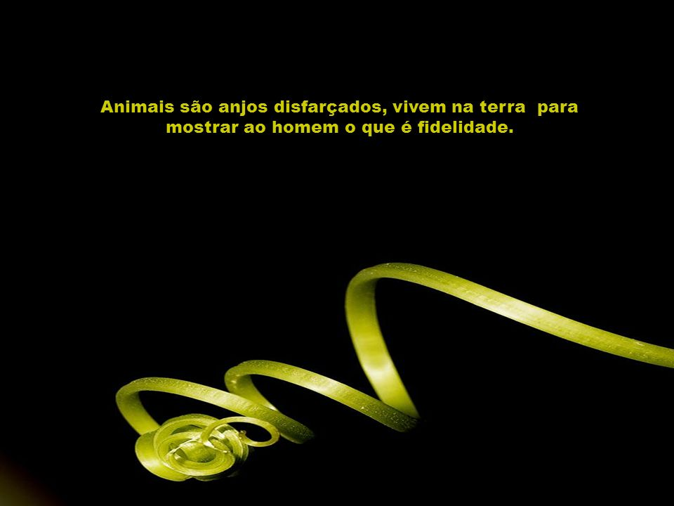 Animais são anjos disfarçados, vivem na terra para mostrar ao homem o que é fidelidade.