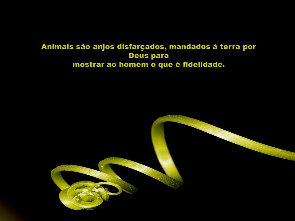 Animais são anjos disfarçados, mandados à terra por Deus para mostrar ao homem o que é fidelidade.