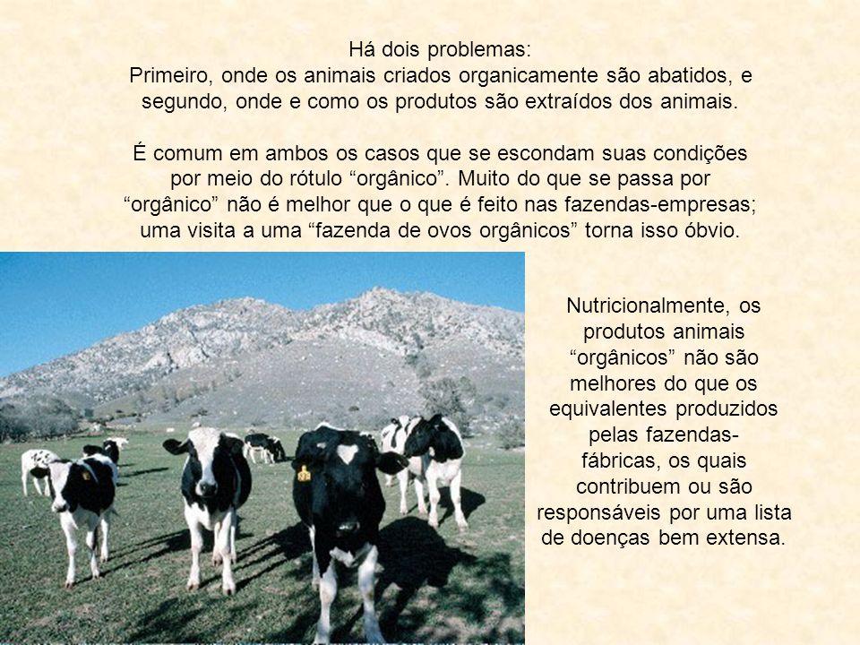Primeiro, onde os animais criados organicamente são abatidos, e