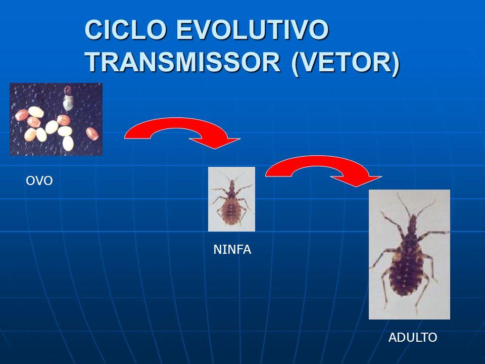 CICLO EVOLUTIVO TRANSMISSOR (VETOR)