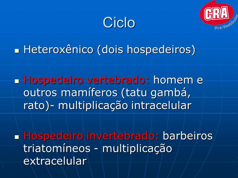 Ciclo Heteroxênico (dois hospedeiros)