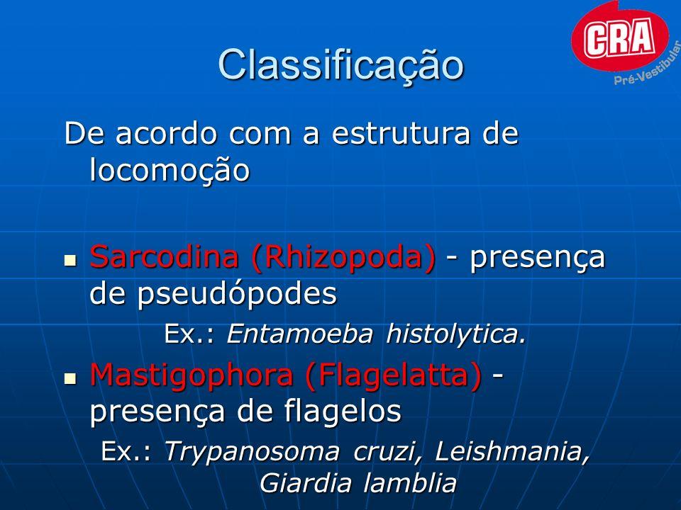 Classificação De acordo com a estrutura de locomoção