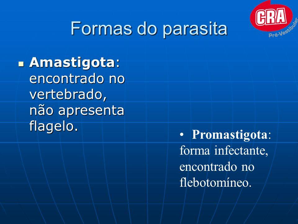 Formas do parasita Amastigota: encontrado no vertebrado, não apresenta flagelo.