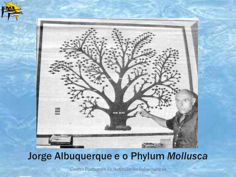 Jorge Albuquerque e o Phylum Mollusca