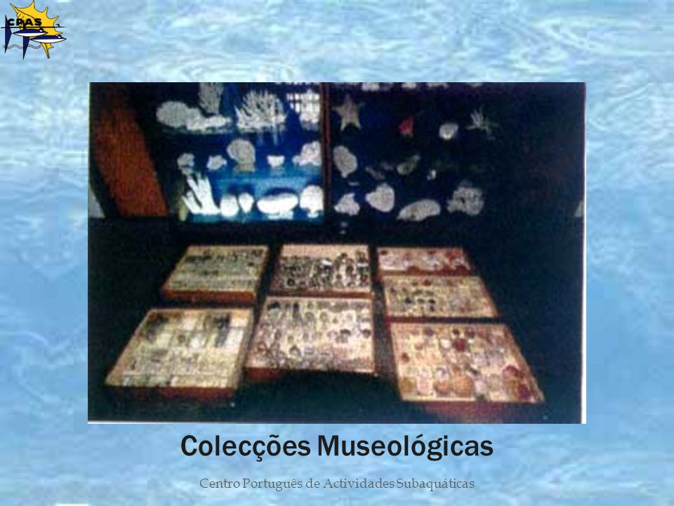 Colecções Museológicas
