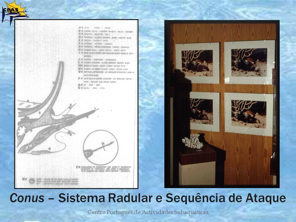 Conus – Sistema Radular e Sequência de Ataque