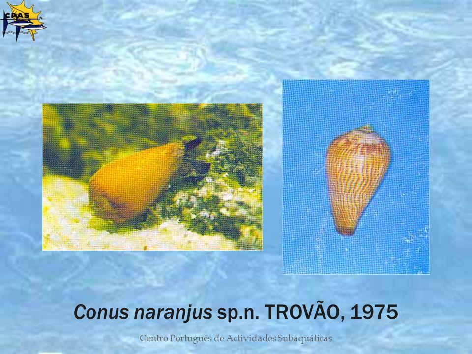 Conus naranjus sp.n. TROVÃO, 1975