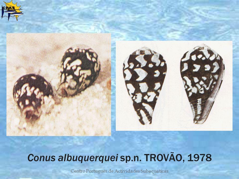 Conus albuquerquei sp.n. TROVÃO, 1978