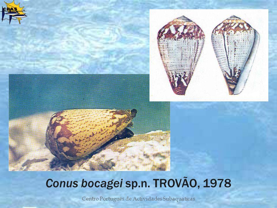 Conus bocagei sp.n. TROVÃO, 1978