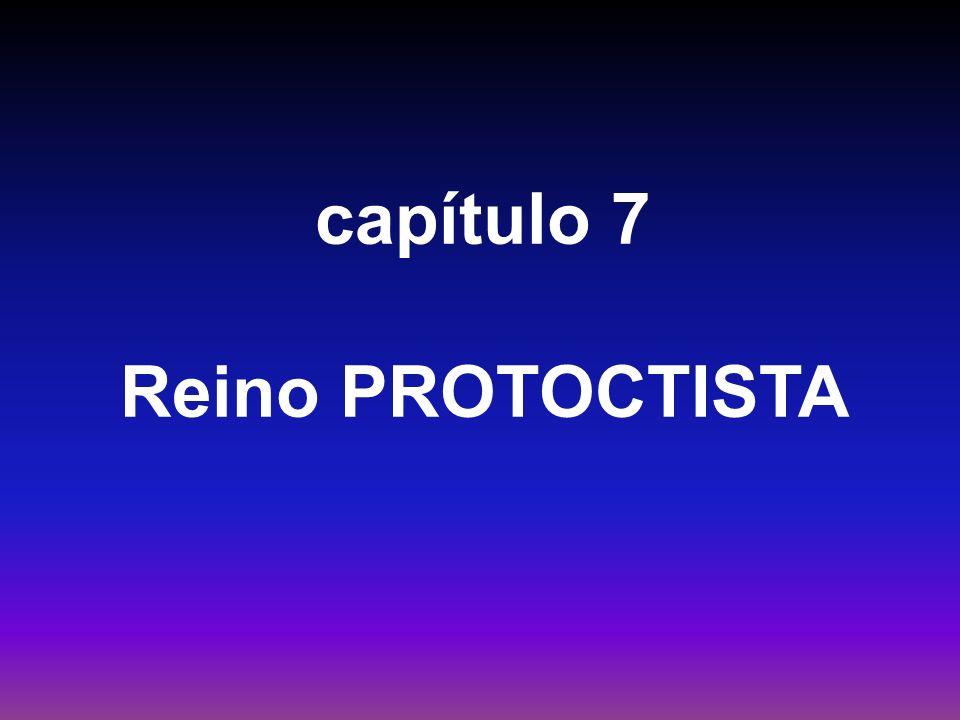 capítulo 7 Reino PROTOCTISTA