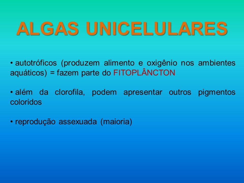 ALGAS UNICELULARES autotróficos (produzem alimento e oxigênio nos ambientes aquáticos) = fazem parte do FITOPLÂNCTON.
