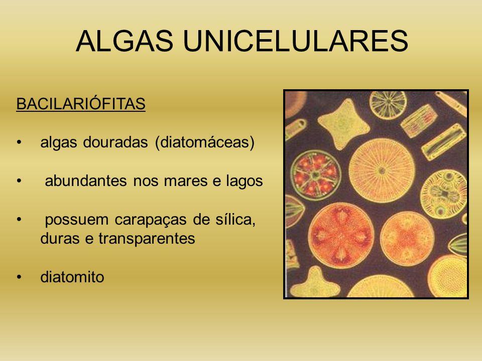 ALGAS UNICELULARES BACILARIÓFITAS algas douradas (diatomáceas)