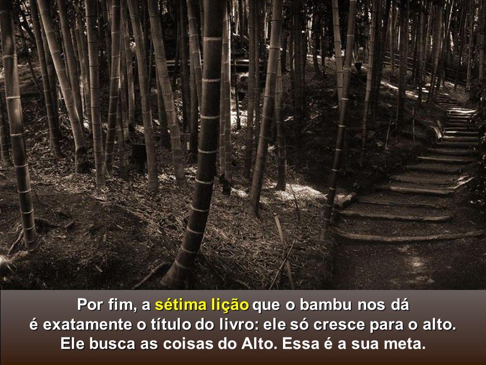 Por fim, a sétima lição que o bambu nos dá