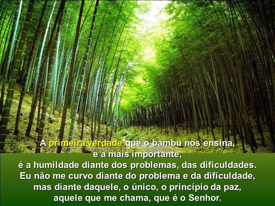 A primeira verdade que o bambu nos ensina, e a mais importante,