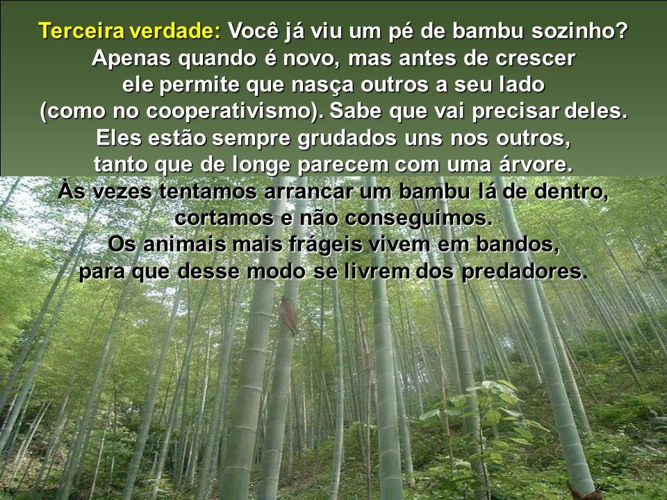 Terceira verdade: Você já viu um pé de bambu sozinho
